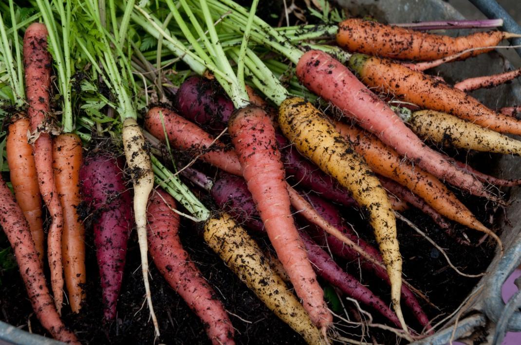 rainbow-mix-carrots